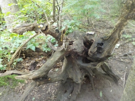 Tread carefully stump