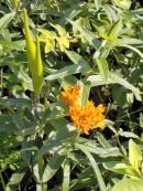 OT - Orange flowers 2