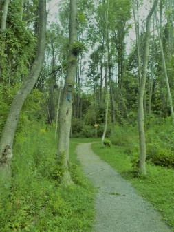 Trail fork.JPG