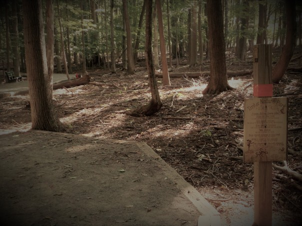 Fairy Trail sign