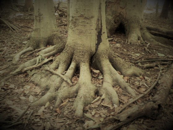 Tree With Feet